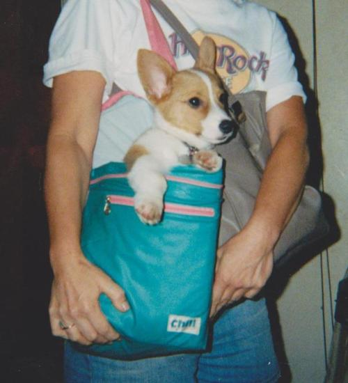 When Gizmo was a puppy he could fit into lunchbox/cooler bag.