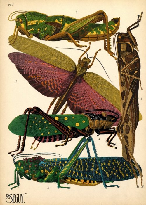 VINTAGE INSECT ILLUSTRATIONS BY E.A. SÉGUY E.A. Séguy is a somewhat mysterious artist, working in France in the early 1900s. From BibliOdyssey: Séguy the artist is best remembered for a couple of series of prints he produced in the 1920s - 'Papillons' and 'Insectes' - both of which are featured above. The wonderfully lush and vibrant colours we see come from the multiple-stencil technique of pochoir printing, usually associated with the Art Nouveau and Art Deco movements.