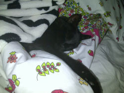 My lil cat toby all covered up sleeping on my bed :)