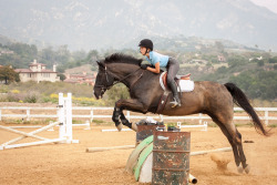 youreoffcoursebitch:  thatawkwardequestrian:  Fangirling over my own horse.. is that weird? Mia your pictures are amazing    // //