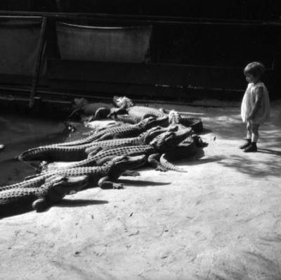 Los Angeles Alligator Farm, 1920s