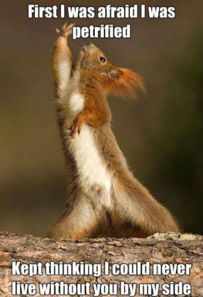 I will survive, squirrel style @DarkSquirrel001