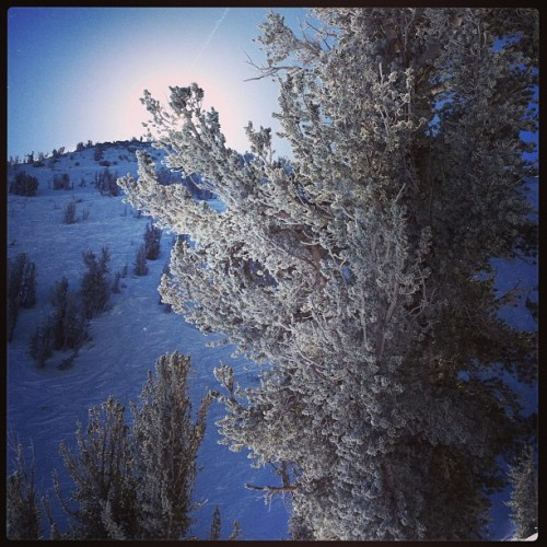 @skiheavenly epic powder day on Christmas Eve! #mountains #trees #tahoe #snowboarding #snow #winterisfun #winter #laketahoe #sierras #southlaketahoe #california #heavenly #natureisbeautiful #ilovemylife  (at Mott Canyon)