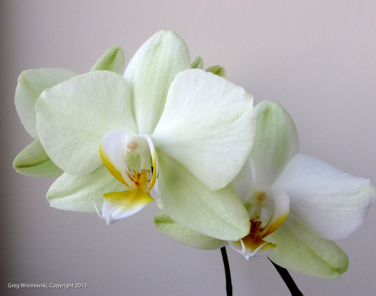 More white orchids. Because they were there.