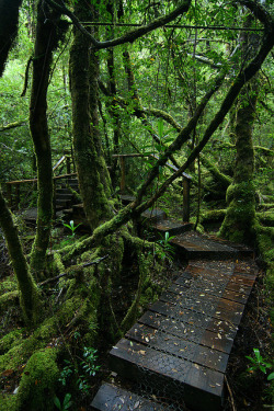 visitheworld:  Creepy crawly track in the Great Wilderness of Tasmania, Australia (by Eddy.H).