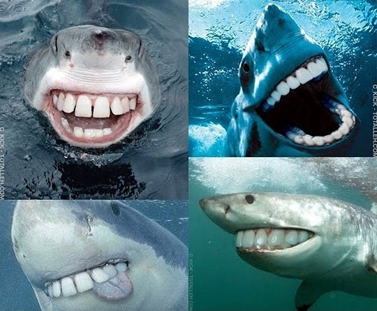 semicolson:  Fun fact: Sharks have a great sense of humor.   Funny