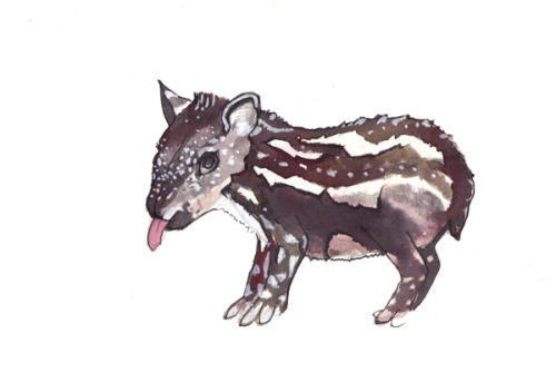 Adorable illustrated tapirs for an upcoming children's book about what it's like to be different. Check it out!