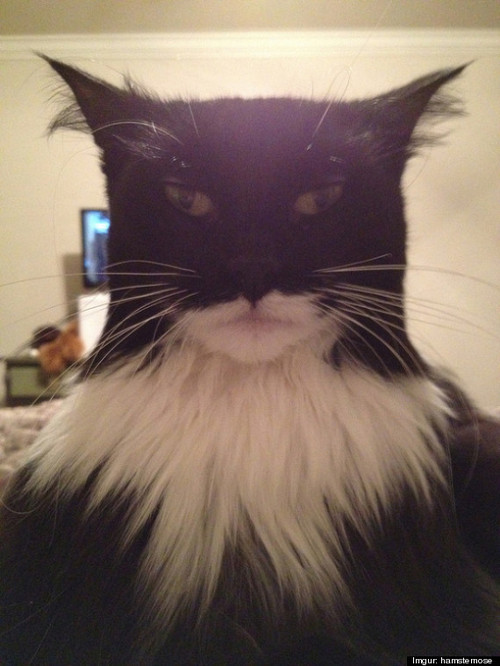 Batman kitty.