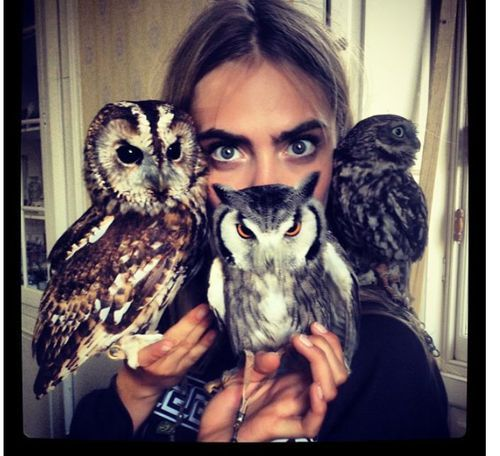 Unimpressed owls have unimpressed human friend.