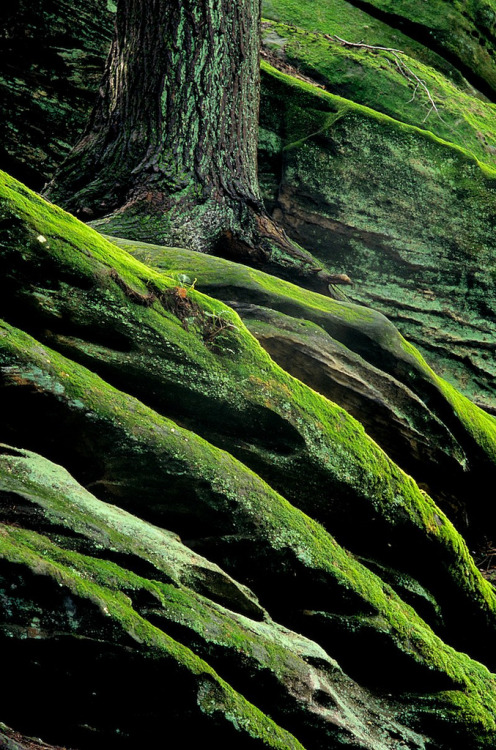 lamescapes:  Hocking Hills
