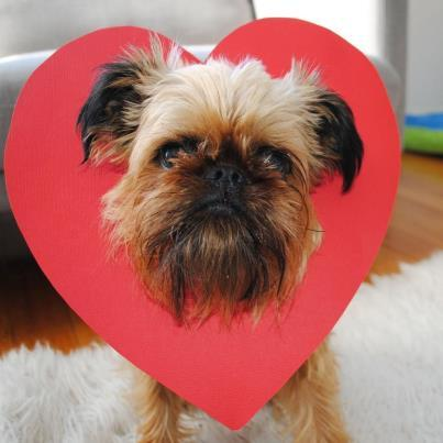 Heart head Digby Digby Van Winkle is always up on all the latest trends, he is taking over from the Pugs. http://www.buzzfeed.com/mjs538/disturbing-trend-pug-heart-heads Digby would like to take a break from bacon to wish you a happy valentine's day @digbyvanwinkle on Instagram