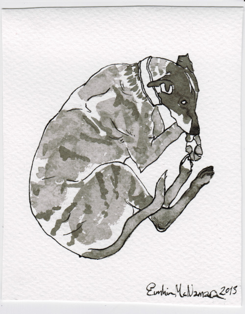 eimhinssecrettumblr:  An ink drawing of Leroy the lurcher for a Scottish Greyhound Sanctuary charity auction. Available as a print here: LINK