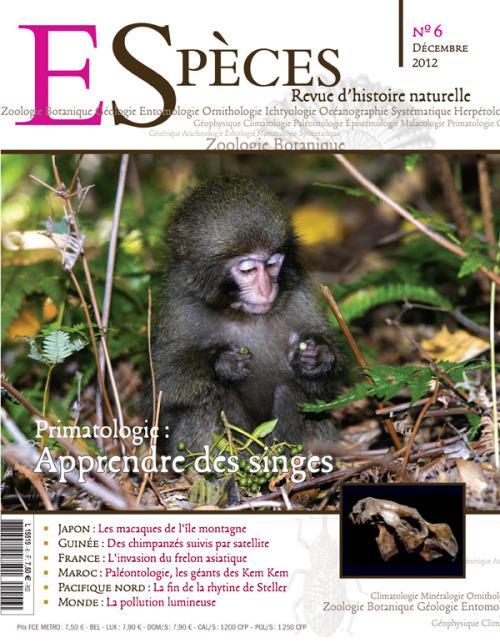 """Ce sont eux qui nous ont forcés, les premiers, à revoir les frontières de l'animalité. Outils, traditions, structures sociales… nous n'avons pas fini d'apprendre de nos cousins primates. Notre numéro 6 vous promet de belles rencontres: avec un """"archéologue des primates"""", Frédéric Joulian, mais aussi avec des macaques japonais à l'épaisse fourrure et des chimpanzés recouvrant leur liberté dans les forêts de Guinée.Les singes nous parlent de nous, mais n'oublions pas de parler d'eux! (sommaire complet ici)."""
