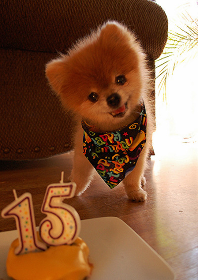 funnywildlife:  It's TJ's B-Day!!! 15 years old!! by Teddy n TJ Rule the World! on Flickr.