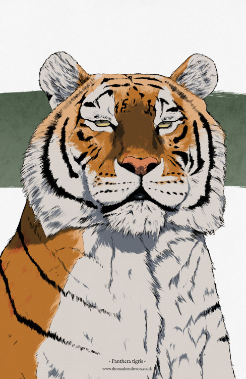 Tiger illustration. Check it out!