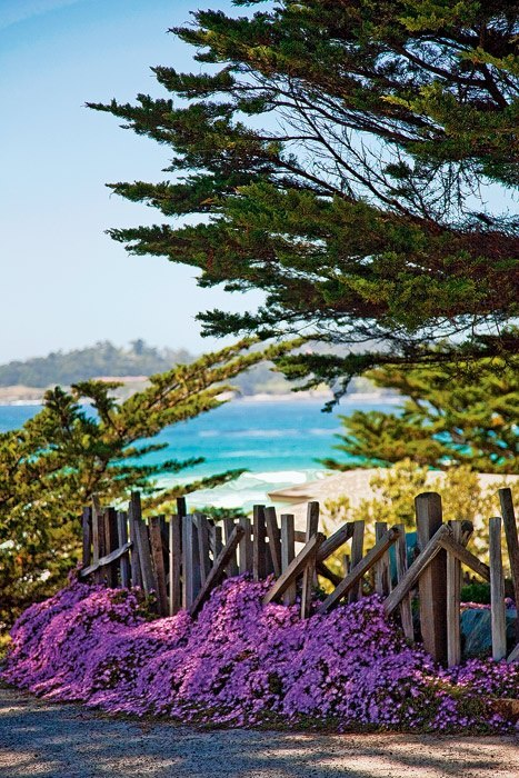 Good morning from Carmel-by-the-Sea! Come fly away with us!