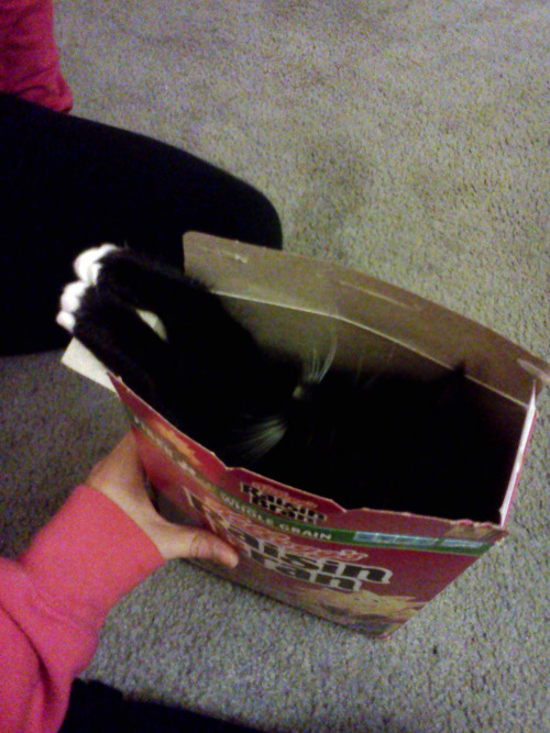 getoutoftherecat:  get out of there cat. i almost recycled you.  Two scoops of kitteh