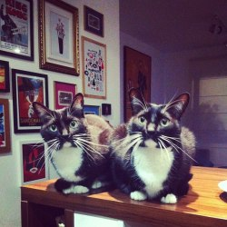 catsbeaversandducks:   Twins! Photo by ©Rubia Sproesser Matiazzi   Adorable!