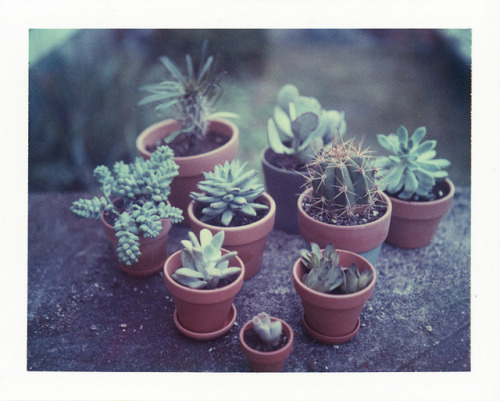 Cactus Family by Parker Fitzgerald on Flickr.