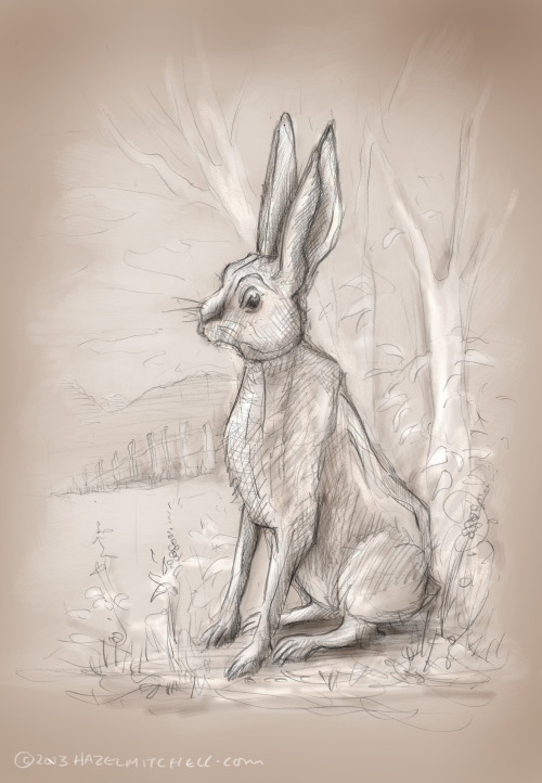 Sketch for today .. The Hare.