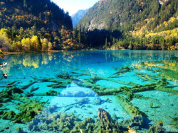 haliburton-frost:  Crystalline Turquoise Lake, Jiuzhaigou National Park, China  I'm getting there this year if it kills me!