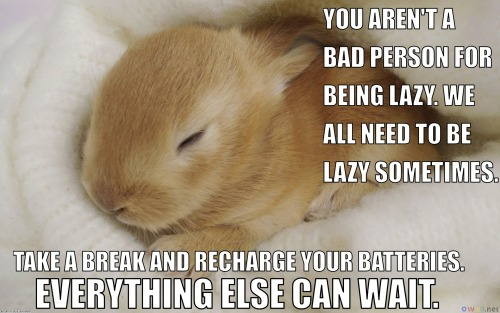 entwined-rose:  steelplatedhearts:  I made a series of Calming Bunnies (based off of the Calming Manatee meme) for my friend Gab, who isn't a huge fan of manatees! We can always use more bunnies, I think.  bunnies  i actually got a little weepy jesus
