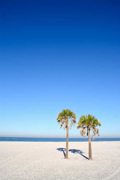 lemoneau:  gemdust:  Clearwater Palms - Flickr  ☆