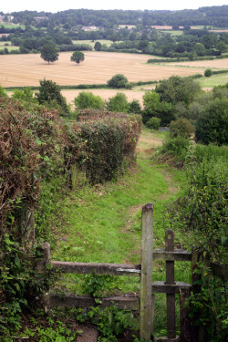 vanimore:  A view of Kent, summer.