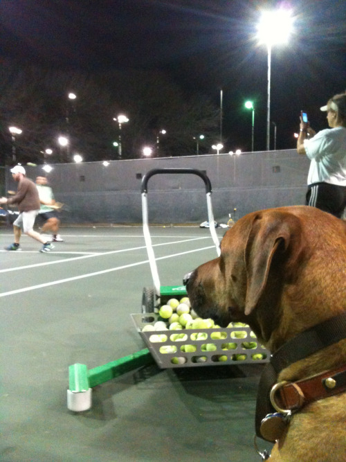 Tenzing enjoys a good tennis match