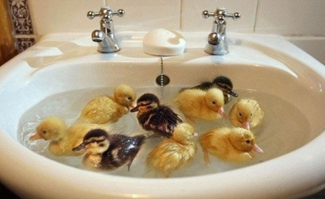 catsbeaversandducks:  Can you spot the rubber ducky? Photo via Imgur
