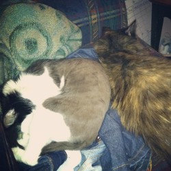 Ursula and Tess cuddled with me last night :)