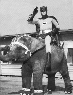 Batman (Adam West) astride his faithful baby elephant steed. [via retronaut]