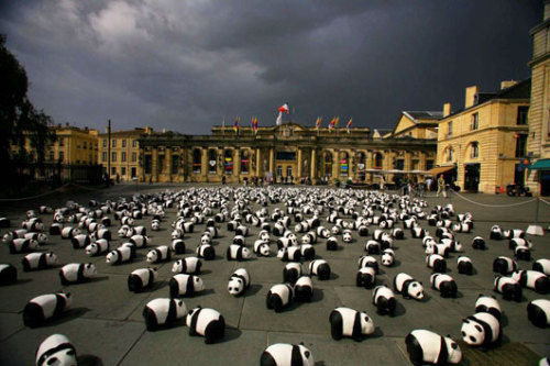 1600 'pandas' parade in France | YeinJee's Asian News