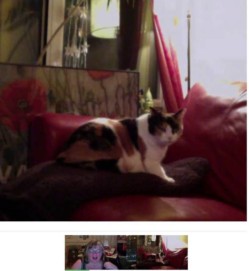 Skyping with that dumb cat.