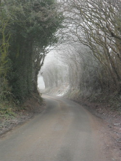 vwcampervan-aldridge:  Frosty archway on Hobs Hole Lane, Aldridge, Walsall, England