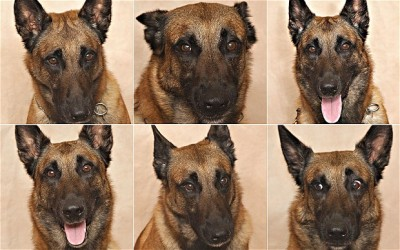 Scientists prove you really can tell what your dog is feeling by looking at its face (x)