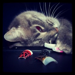 Sure, #cat…play with my #nailpolish swatches, it's totally cool. Lol. #catpicture #catsofinstagram #catstagram