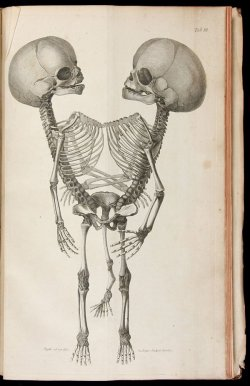 catafalques:  Johann Gottlieb Walter, Observationes Anatomicae