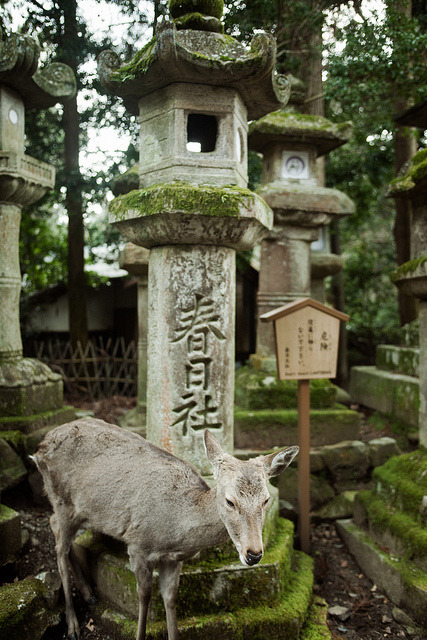 ileftmyheartintokyo:  Nara shrine by mattbenn8 on Flickr.