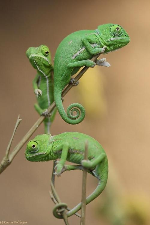 llbwwb:  Tiny Lizards by Kerstin M Photographer .