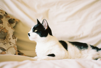lackingly:  (by yossy | apt2bbakingco)