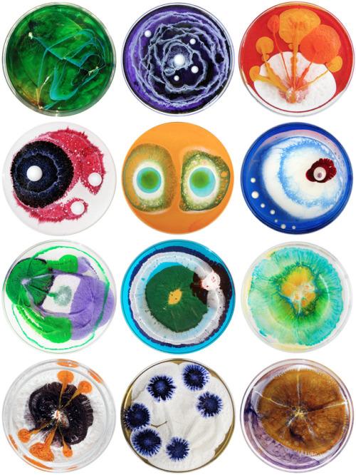 surviving-science:  Petri dish art by Klari Reis   Art meets science.