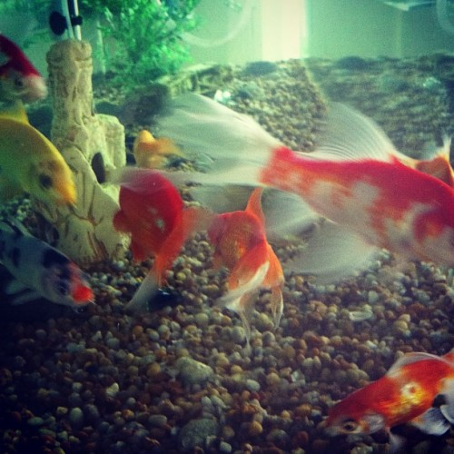 #fish #home #cute