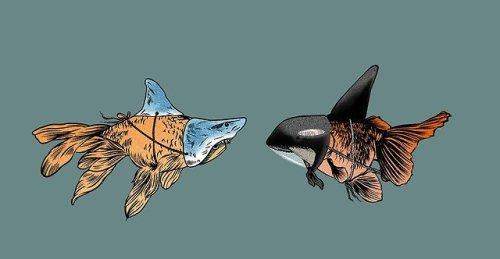 goldfish fishblr art graphic art