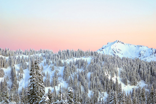 landscapelifescape:  Mt Rainier National Park, Washington State, USA (by Daria Riabchenko)