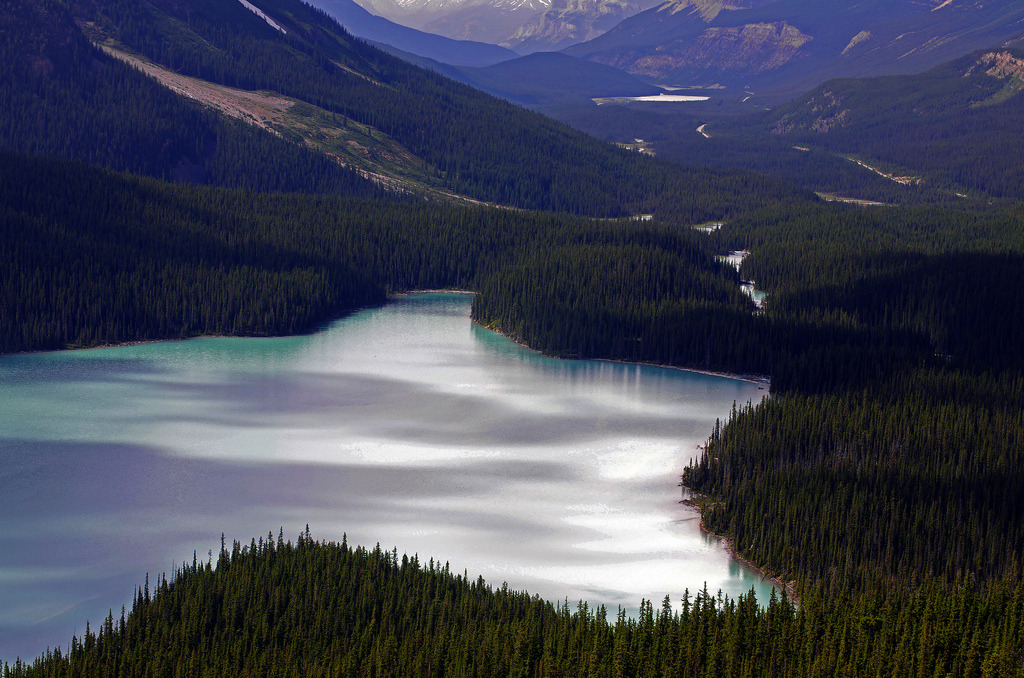 lake peyto (by Reinhard.Pantke)