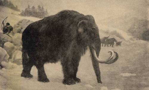Mammoth by Charles R. Knight