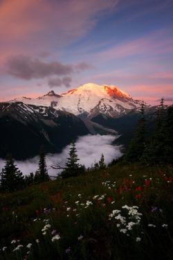 uploads landscape Washington f flowers clouds mountains nature sunrise valley glacier