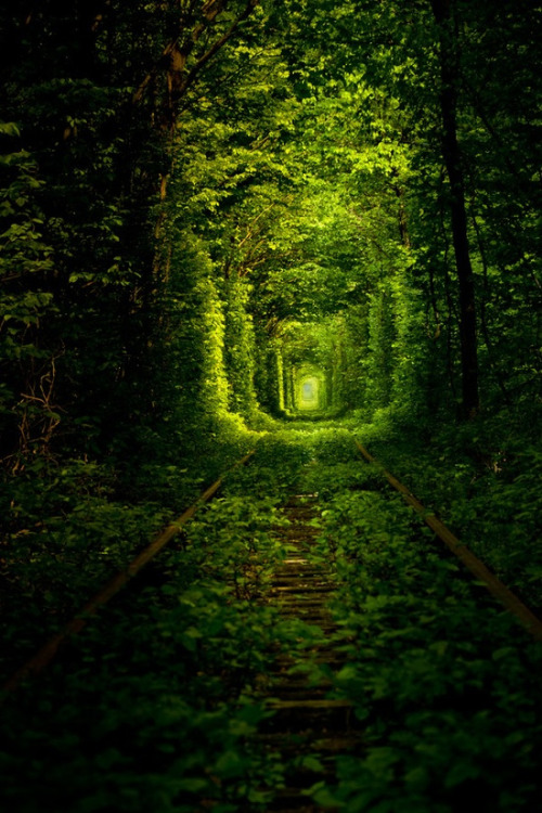 Rail Tree Tunnel, Kleven, Ukraine photo via besttravelphotos