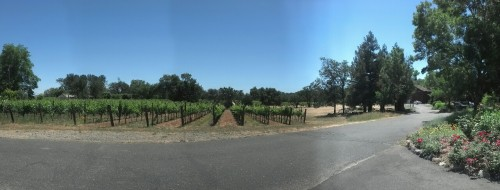 Another one of the plots of vineyards and views from VML!